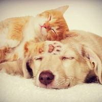 kitten-and-puppy-sleeping-picture-id486901154 (1) (1)